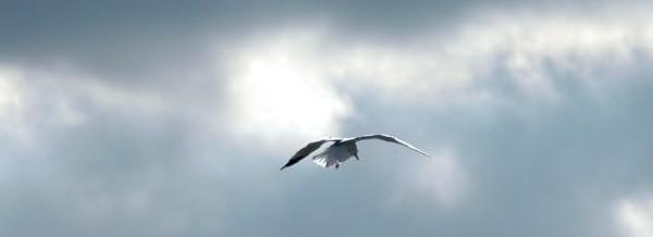 Landscape Photograph - Soaring  Home by Scott Ware