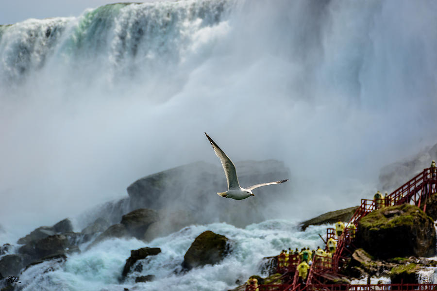 Niagara Falls Photograph - Soaring in the Mist by Pat Scanlon