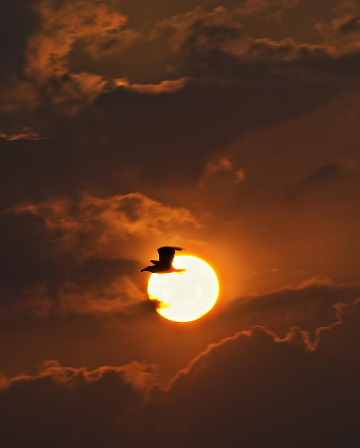 Sunset Photograph - Soaring In The Sun by Tony Reddington