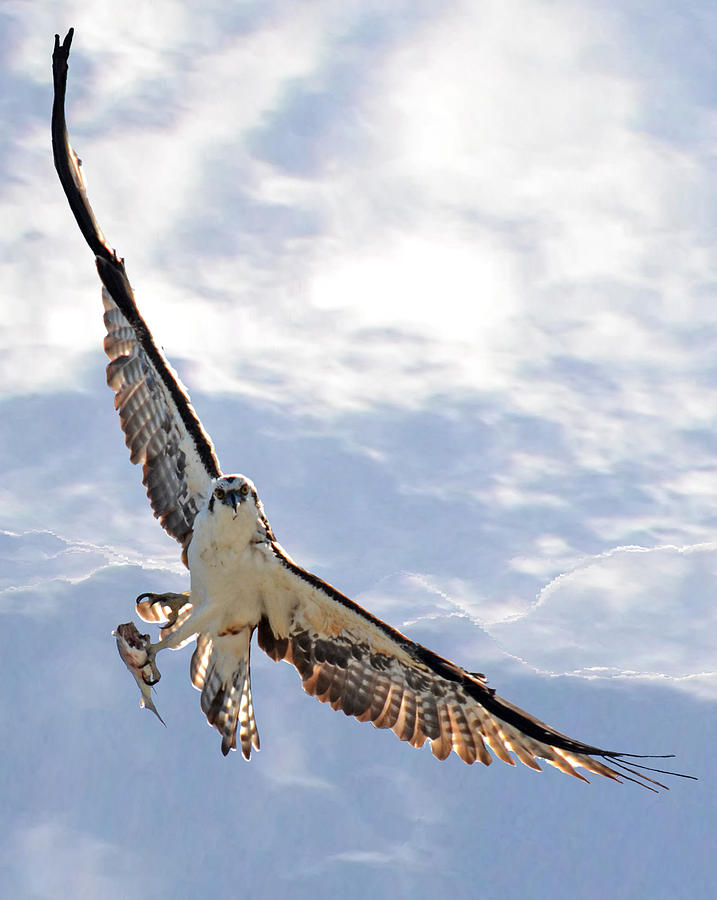 Bird Photograph - Soaring by Julie Cameron