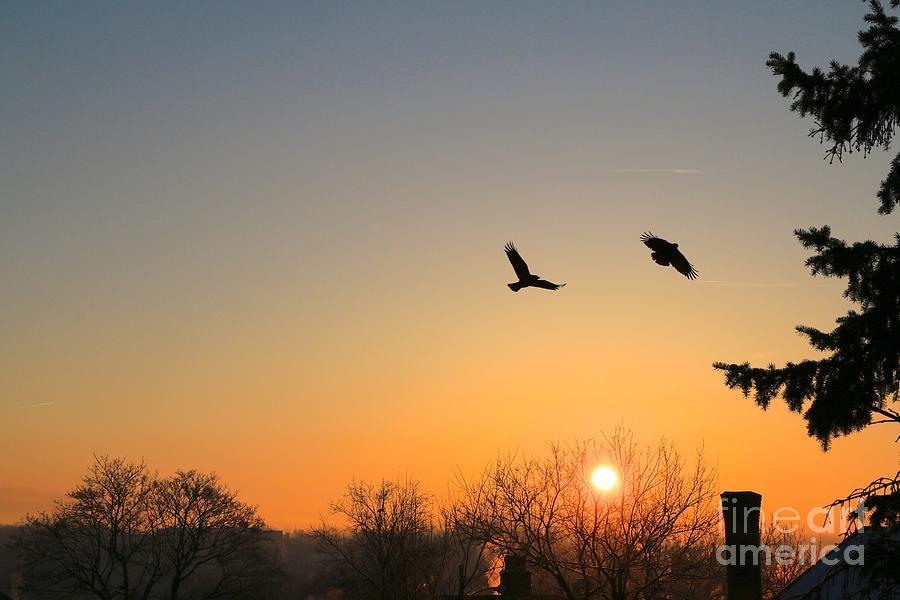 Sunrise Photograph - Soaring Sunrise 3 by Jay Nodianos