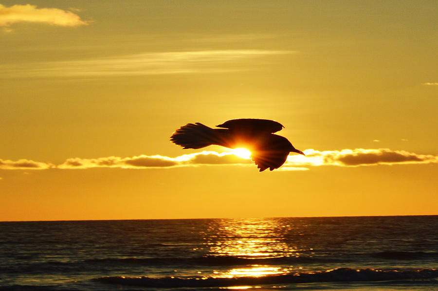 Photo Photograph - Soaring With Confidence by Sherry Allen