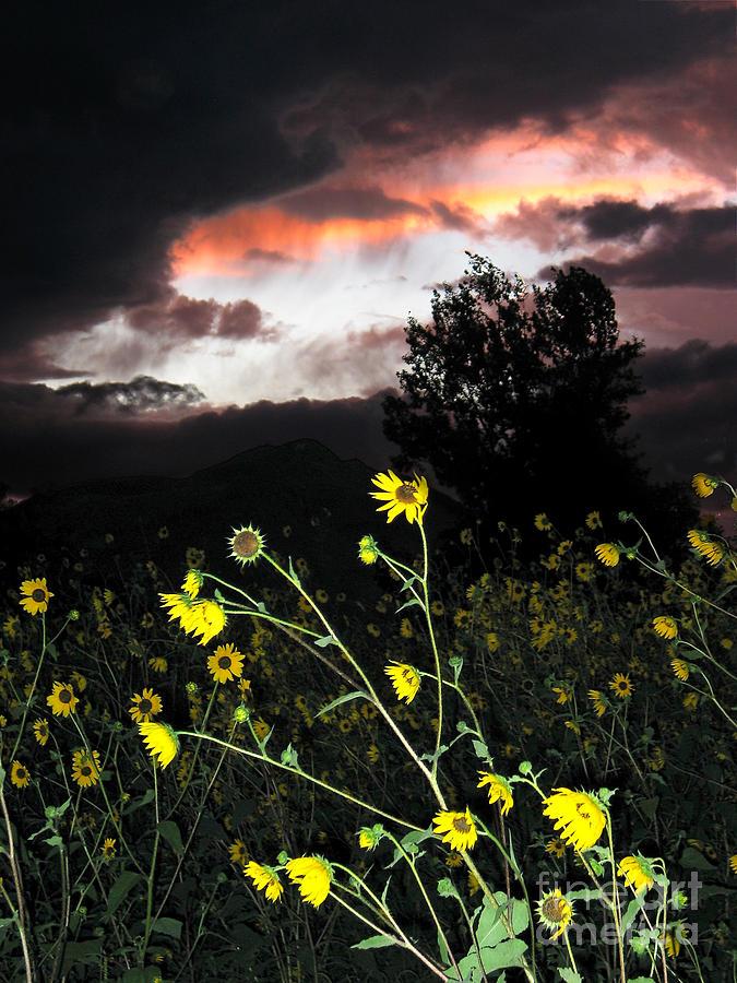 Sunset Photograph - Socorro Sunset by Steven Ralser