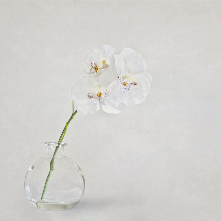 Flower Photograph - Soft As A Whisper by Evelina Kremsdorf