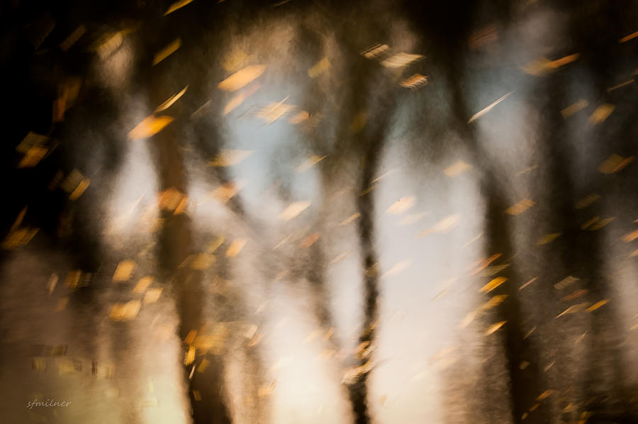 Abstract Photograph - Soft Autumn by Steven Milner