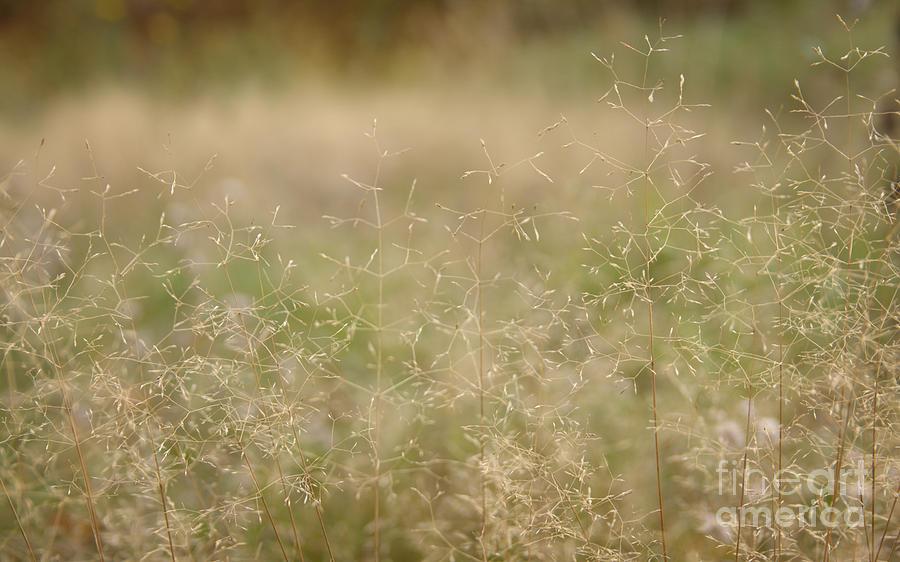 Bent Photograph - Soft Bent Grass by Jolanta Meskauskiene
