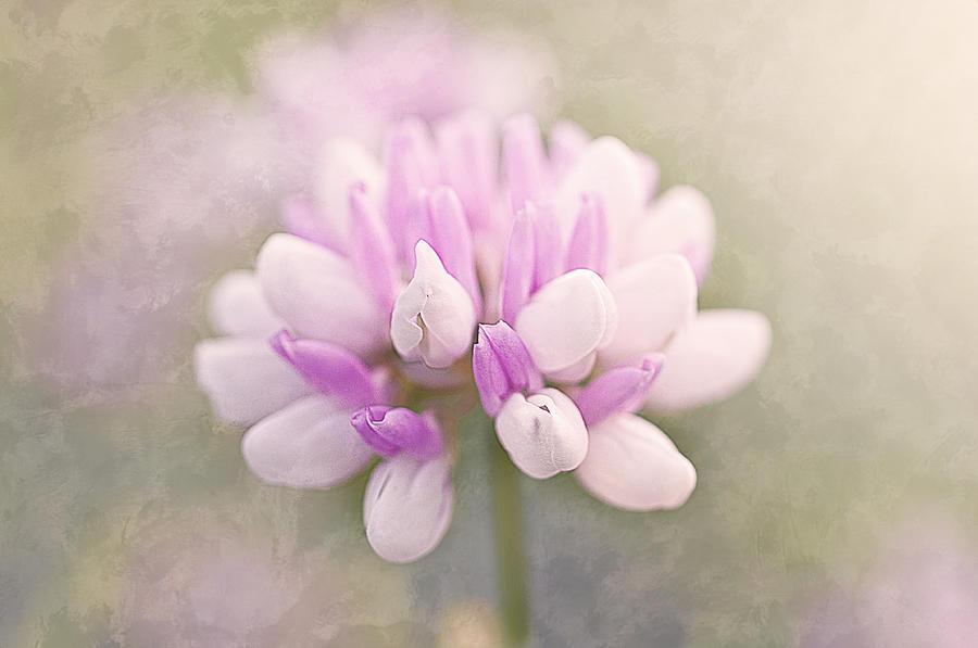 Clover Photograph - Soft Color Clover by Faith Simbeck