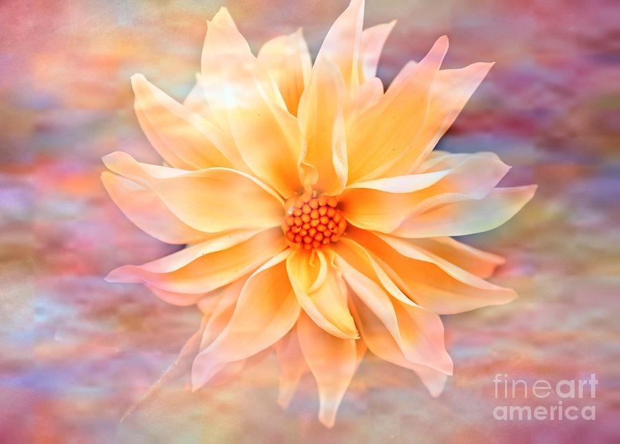 Dahila Photograph - Soft Delightful Dahlia by Judy Palkimas