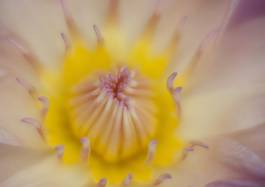 Flower Photograph - Soft by Karen Walzer