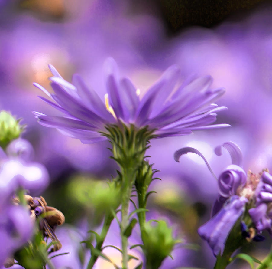 Flower Photograph - Soft Lilac by Leif Sohlman