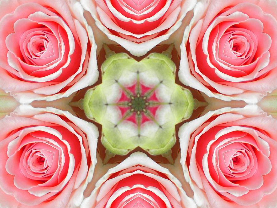 Soft Pink Rose Mandala by Diane Lynn Hix