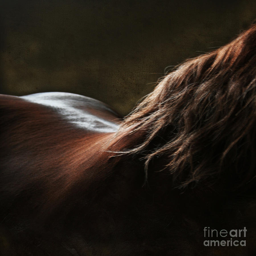 Horse Photograph - Soft Shapes by Angel  Tarantella