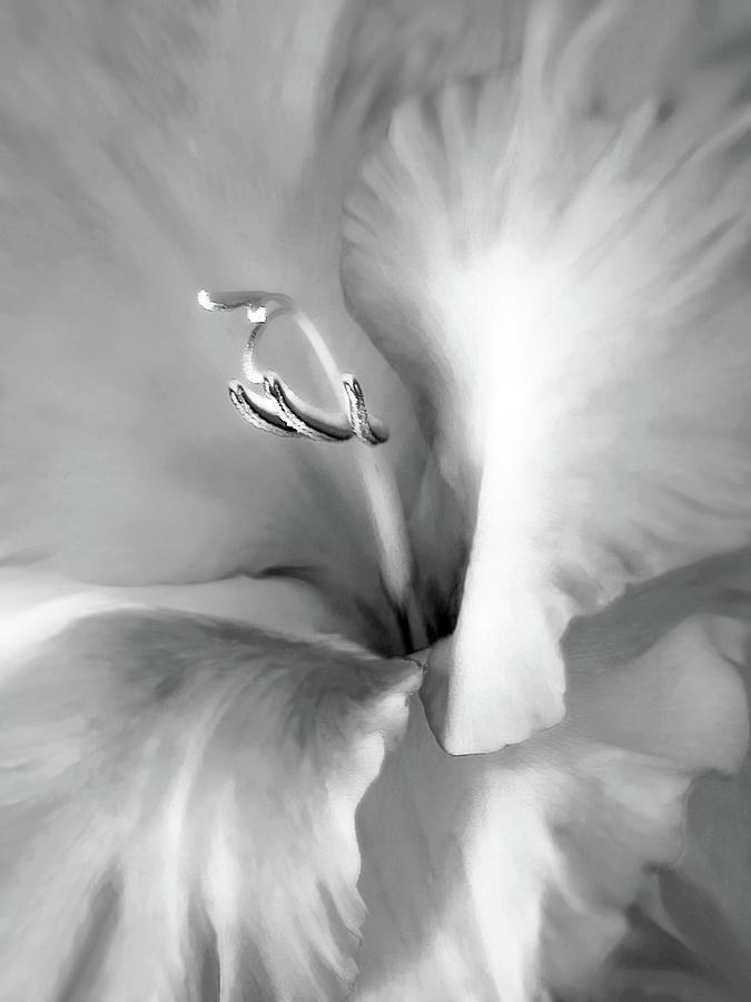Gladiola Photograph - Soft Silver Gladiola Floral by Jennie Marie Schell