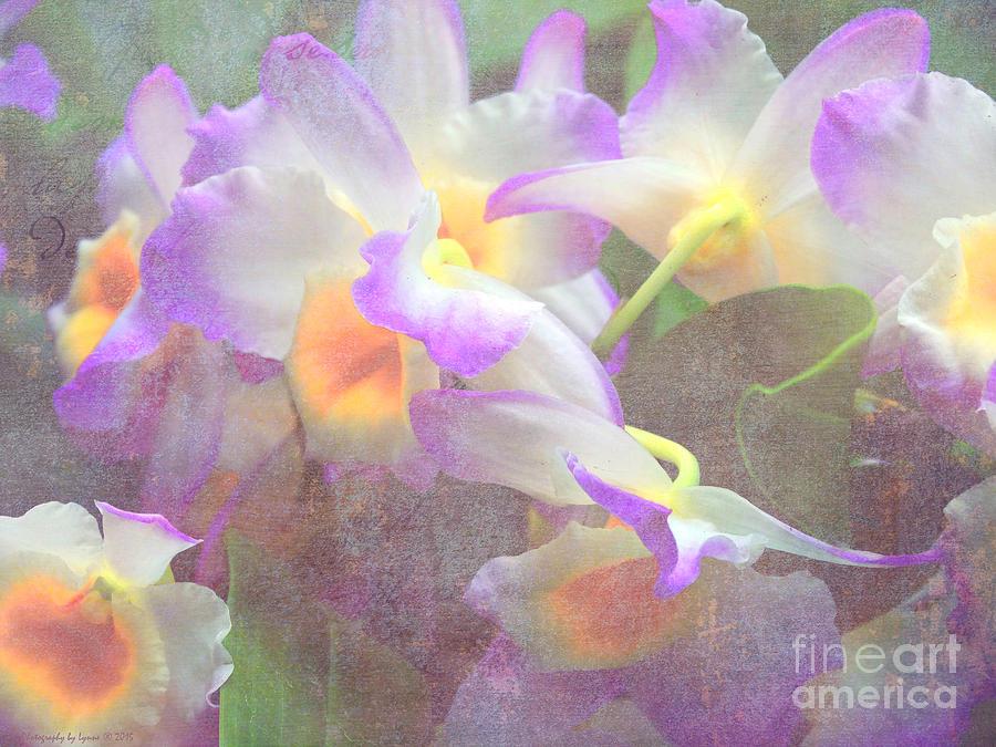 Soft Subtle Orchids Photograph