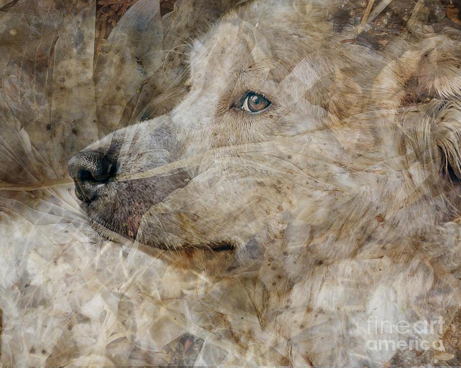 Dog Digital Art - Soft Textures by Judy Wood