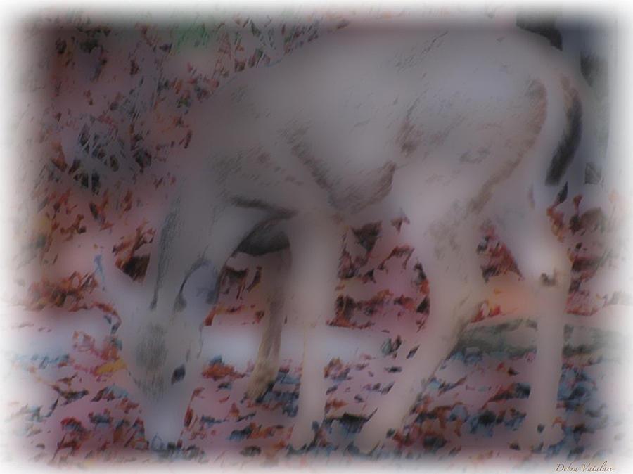Soft Touch Art 1 Photograph - Soft Touch Art 1 by Debra     Vatalaro