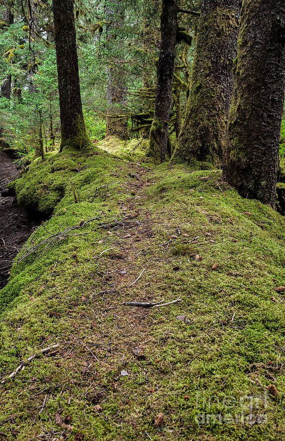 Nature Photograph - Soft Trail by Steven Reed