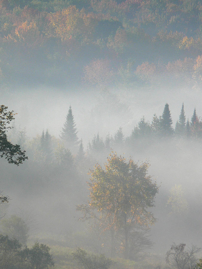 Autumn Photograph - Soft Whisper by Natalie LaRocque