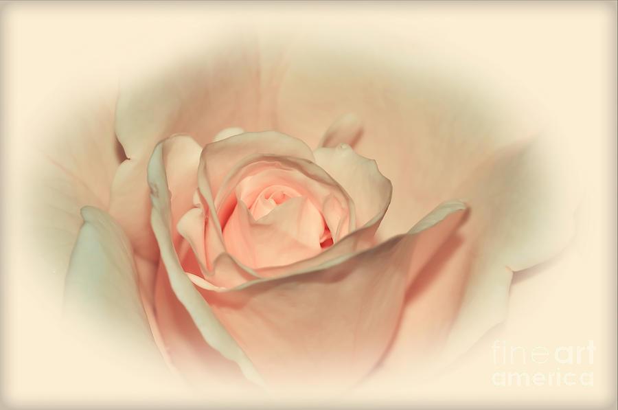 Rose Photograph - Softly Peach by Kaye Menner