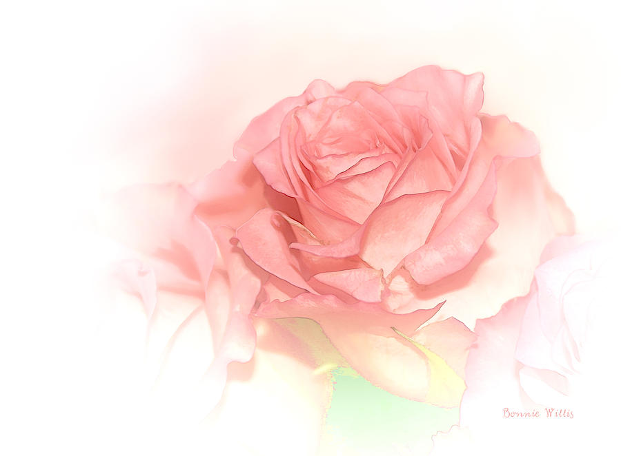 Rose Photograph - Softly Pink by Bonnie Willis