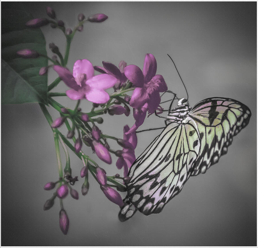 Digital Painting Digital Art - Softly Reflected On A Wing by Jill Balsam