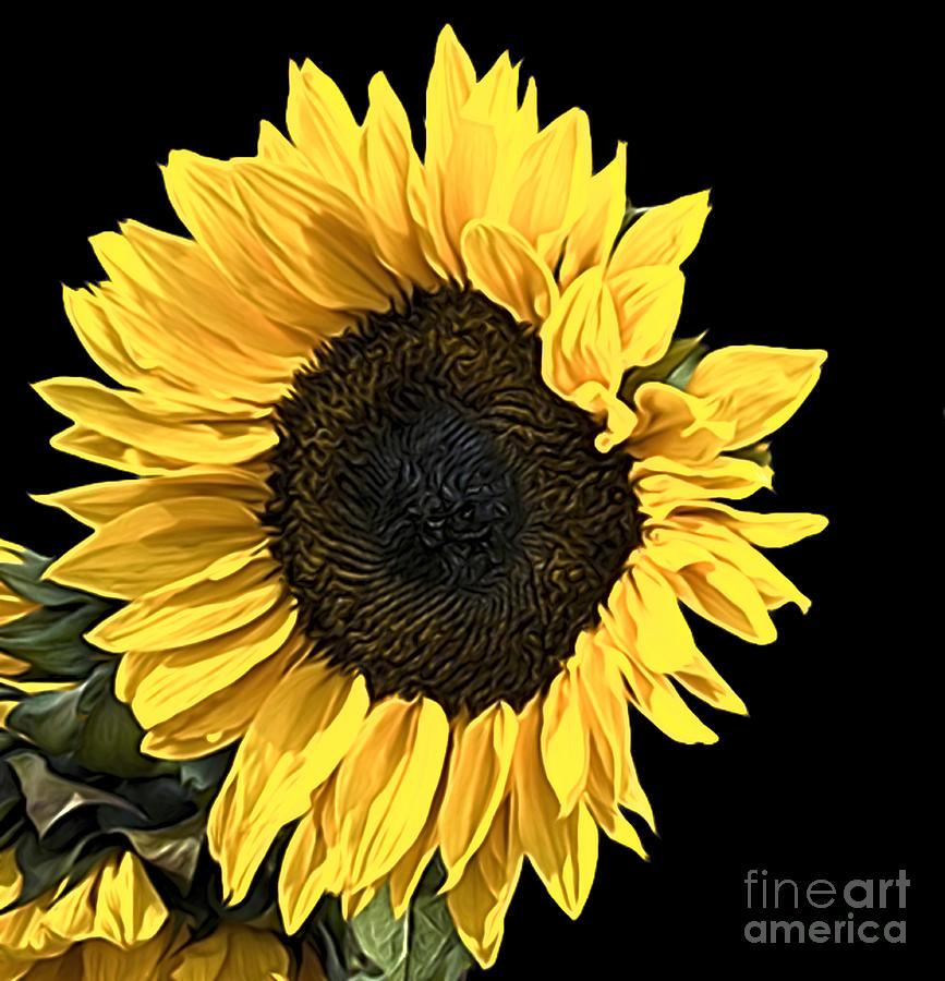 Softly softly Sunflower by Sheila Laurens