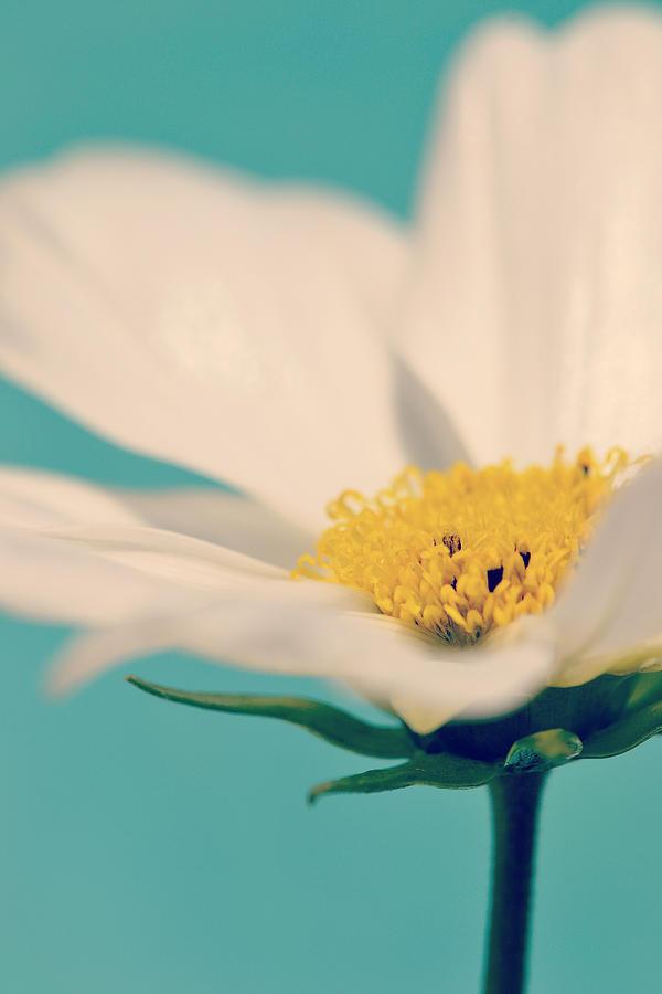 Flower Photograph - Softly Spoken by Melanie Moraga