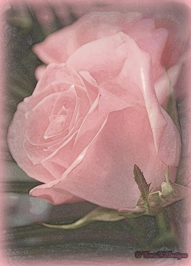 Pink Photograph - Softness by Terri K Designs