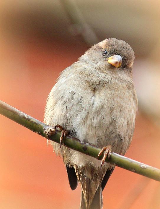 Birds Photograph - Softy by The Art Of Marilyn Ridoutt-Greene