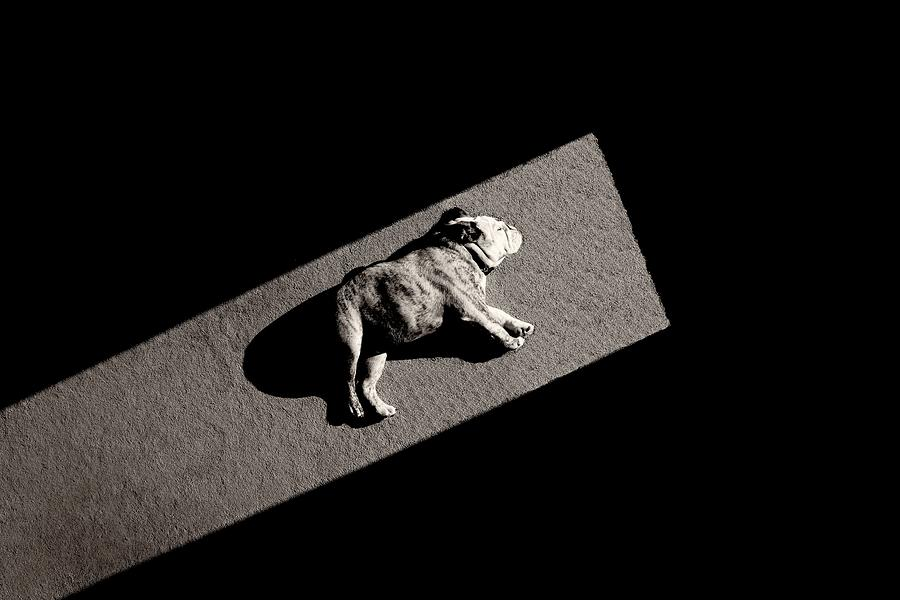 Puppy Photograph - Solar Non-powered by Mike Melnotte