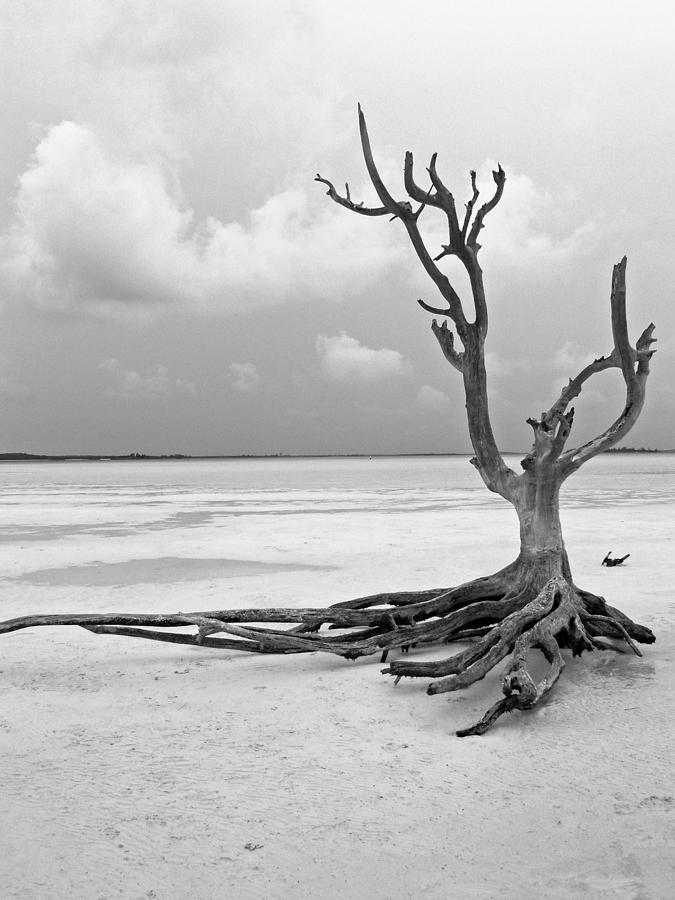 Tree Photograph - Solitary 1 by Sarah-jane Laubscher