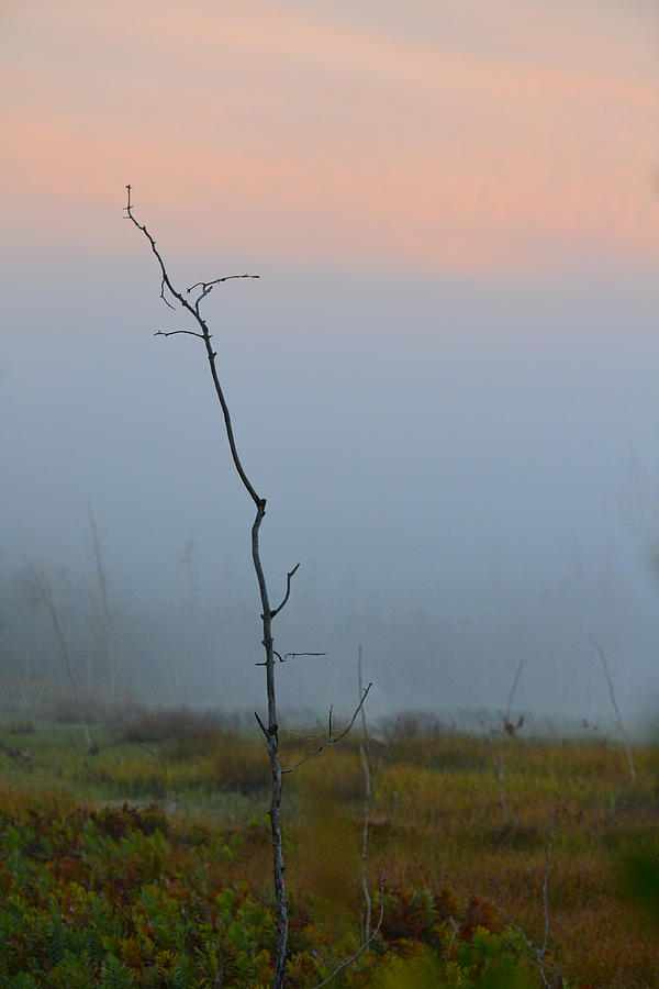 Tree Photograph - Solitary by Beth Sawickie