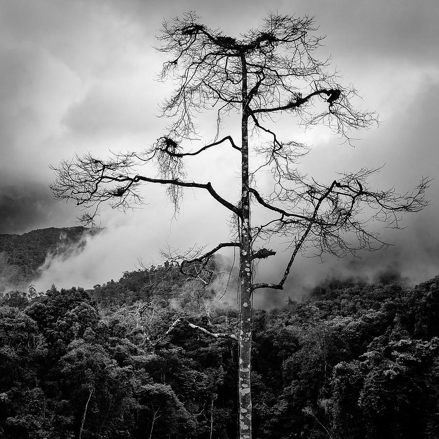 Cameron Highlands Photograph - Solitary Tree by Dave Bowman