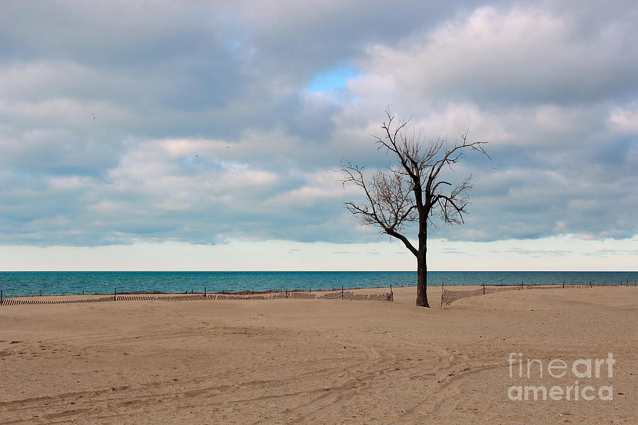 Tree Photograph - Solitude by Dipali S