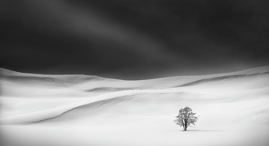 Snow Photograph - Solitude by Huibo Hou