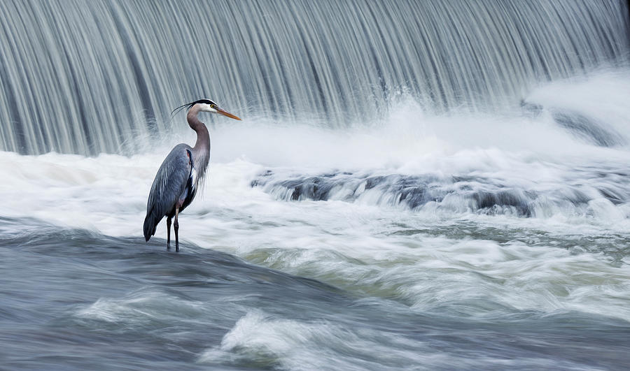 Bird Photograph - Solitude In Stormy Waters by Mircea Costina