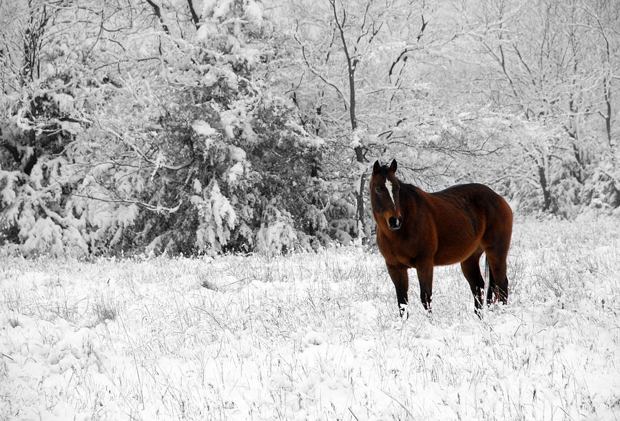 Snow Photograph - Solitude by Jessica Wakefield