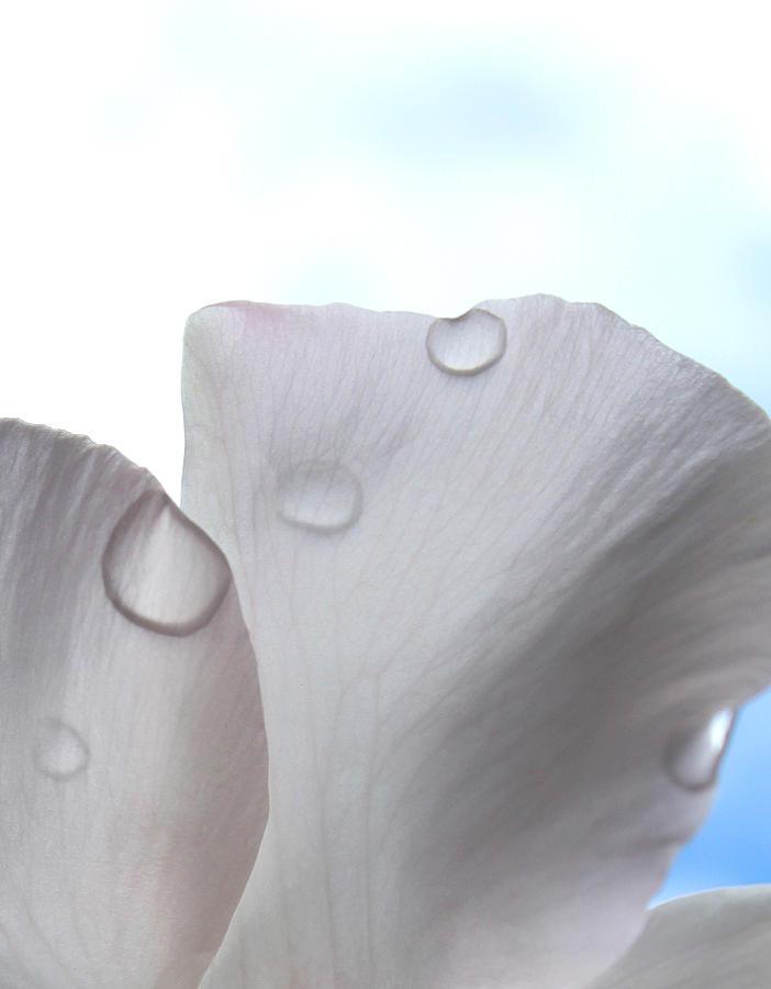 Flowers Photograph - Solitude by The Art Of Marilyn Ridoutt-Greene