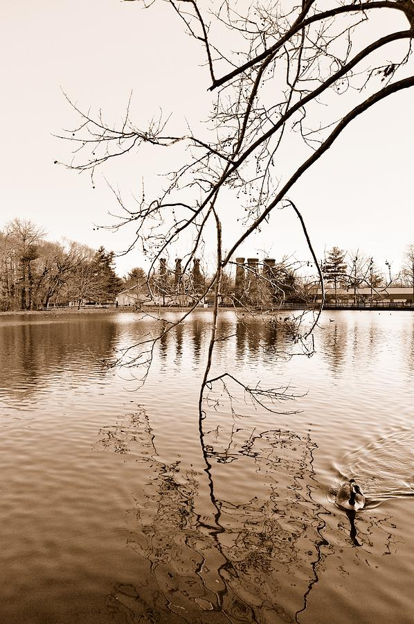 Lake Photograph - Solitude by Thomas  MacPherson Jr