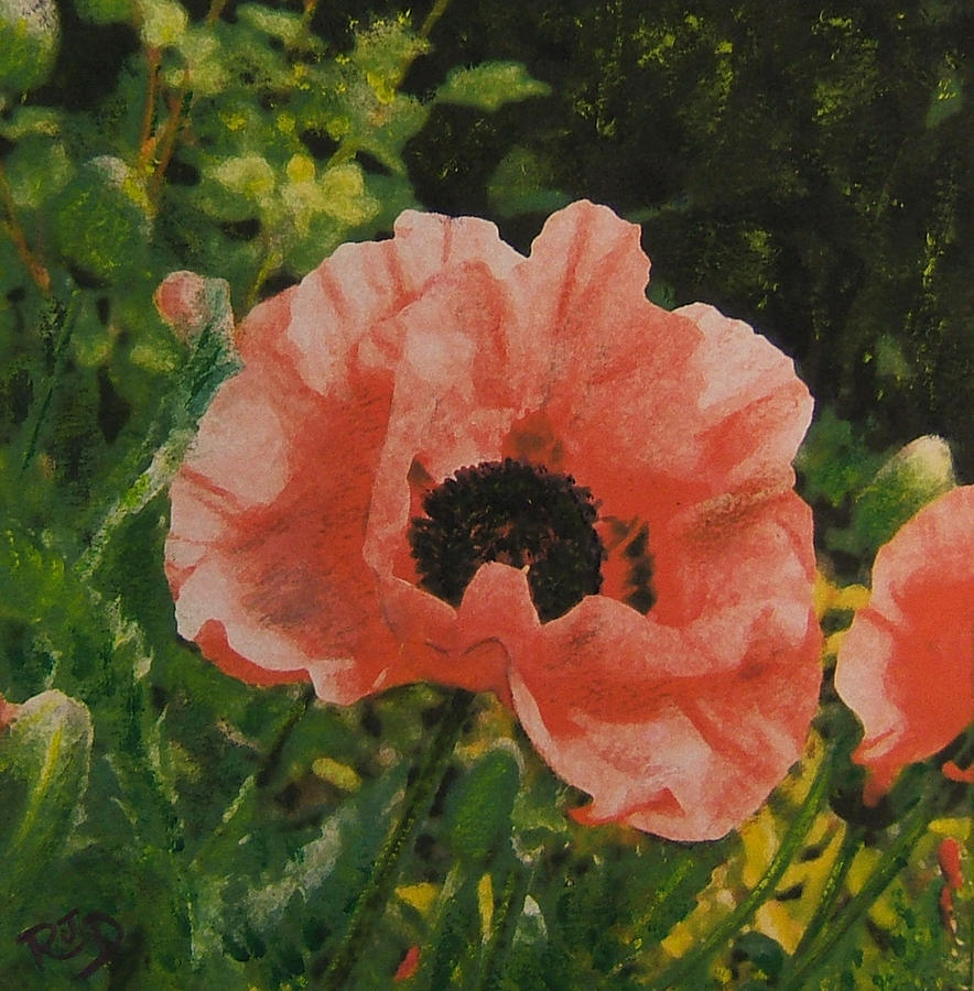 Solo Poppy Painting