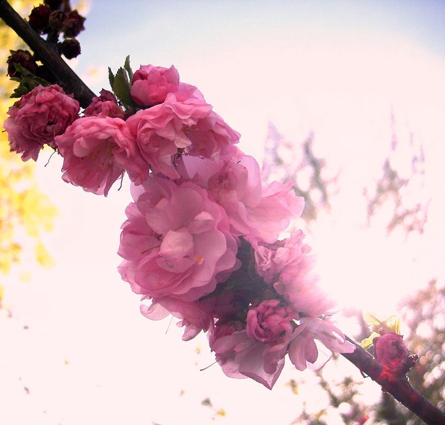 Some Beautiful Flowers Photograph by Tushar Wadhwa