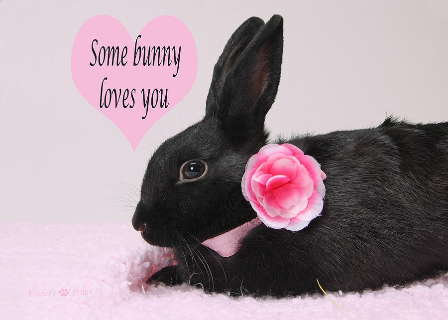 some bunny loves you photograph by kimber butler. Black Bedroom Furniture Sets. Home Design Ideas