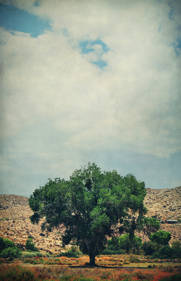 Big Morongo Canyon Preserve Photograph - Some Days I Believe by Laurie Search