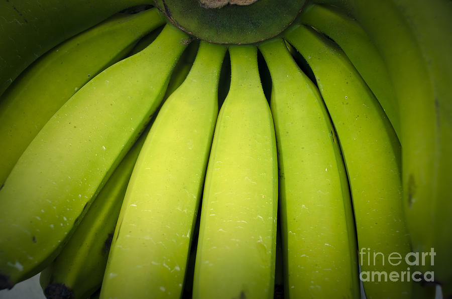 Banana Photograph - Some Green Fresh Bananas On A Street Fair In Brazil. by Ricardo Lisboa