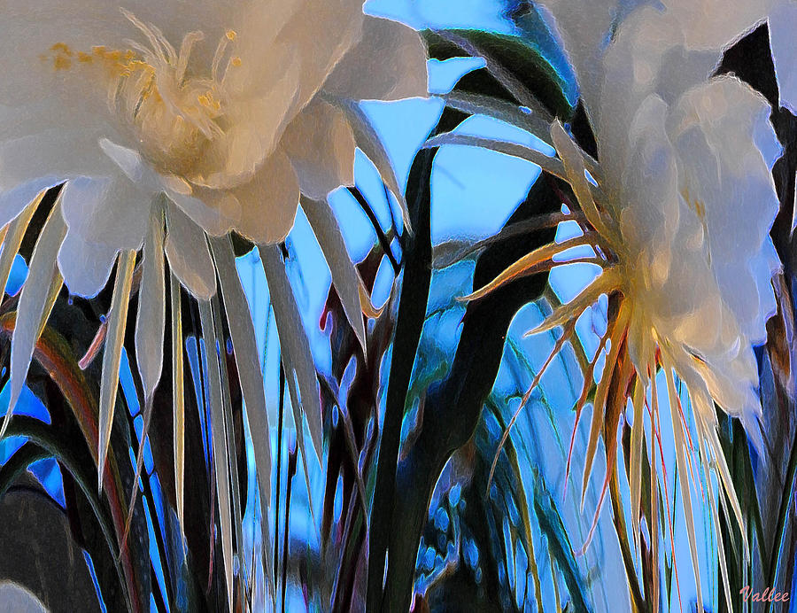 Digital Photograph - Some Serious Flowers by Vallee Johnson