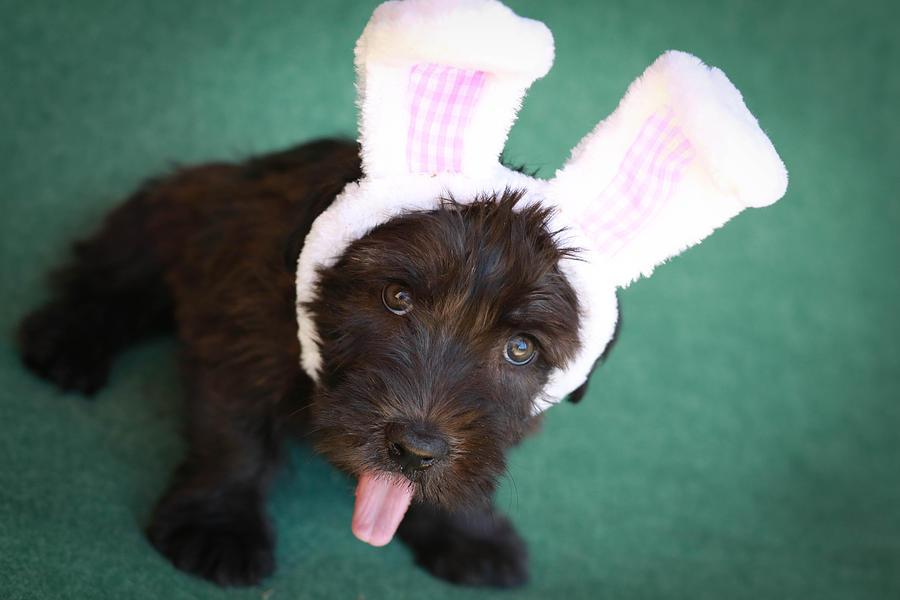 Puppy Photograph - Somebunny Loves You by Brenda Schwartz