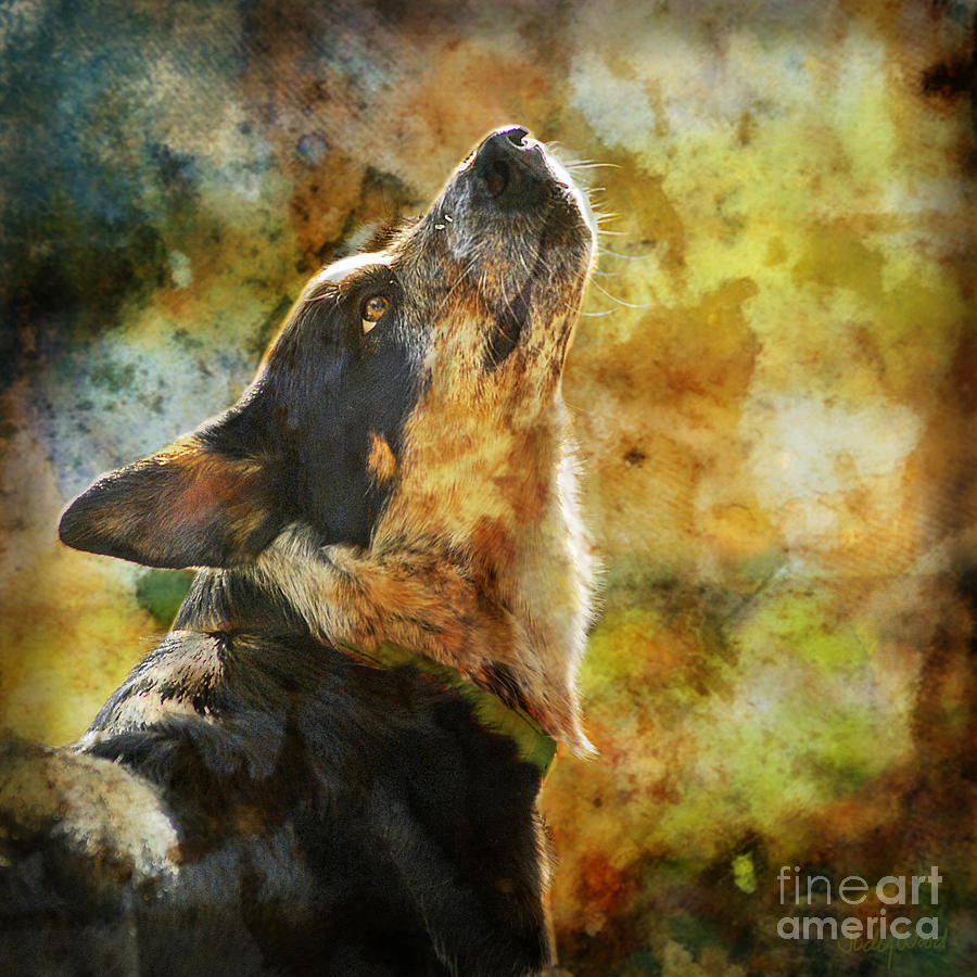 Dog Digital Art - Something In The Wind by Judy Wood