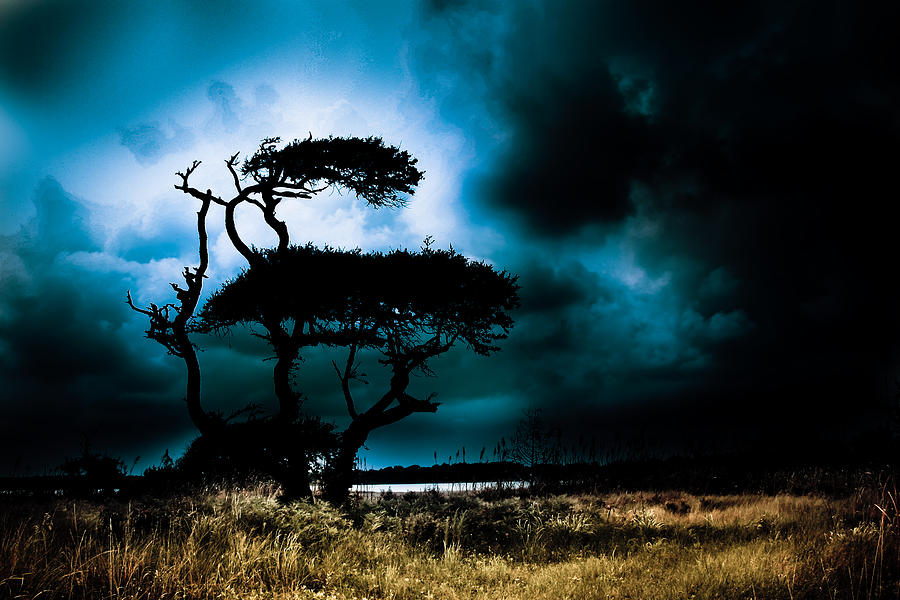 Live Oak Photograph - Something Wicked This Way Comes by Shane Holsclaw