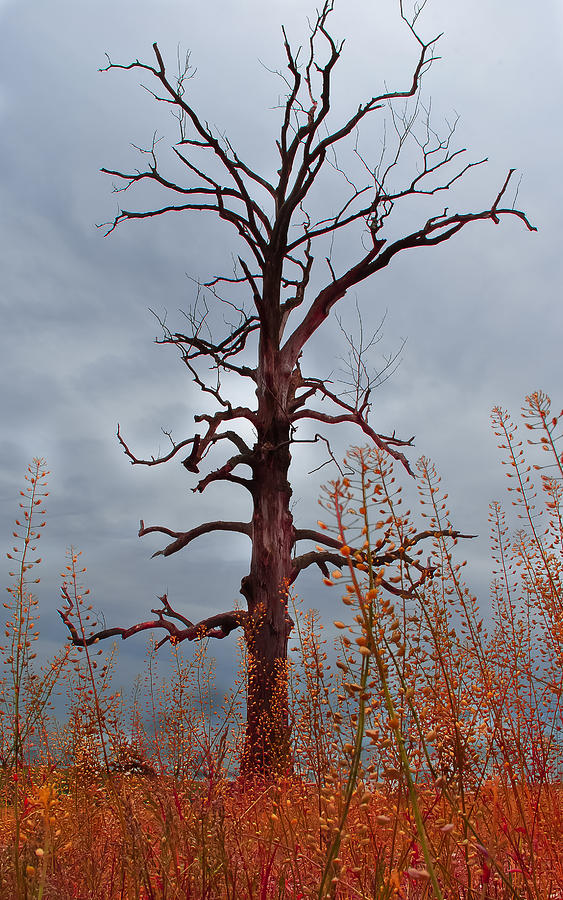 Tree Photograph - Something Wicked This Way Comes by Wayne King