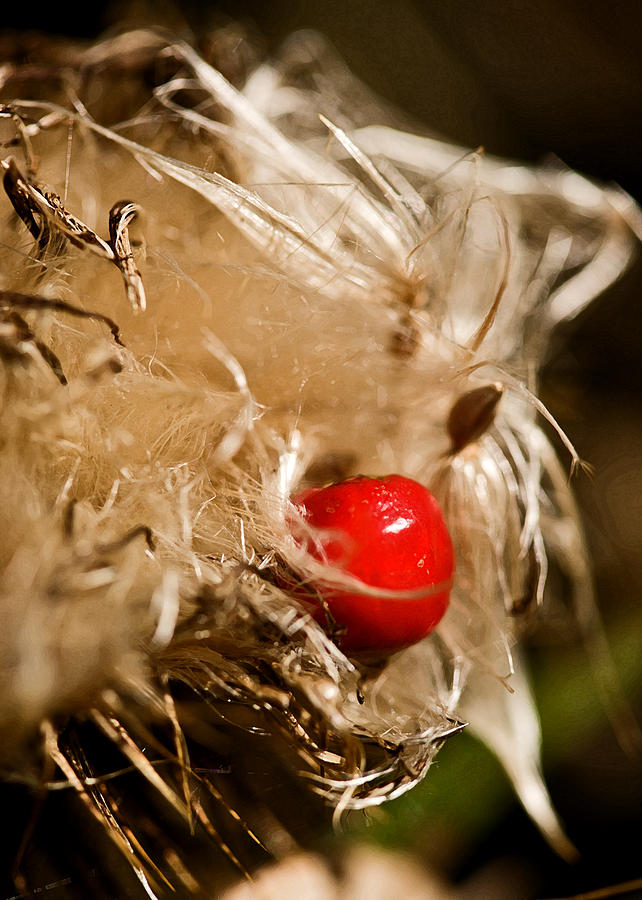 Seed Photograph - Sometimes Wrong Can Feel So Right by Liz  Alderdice